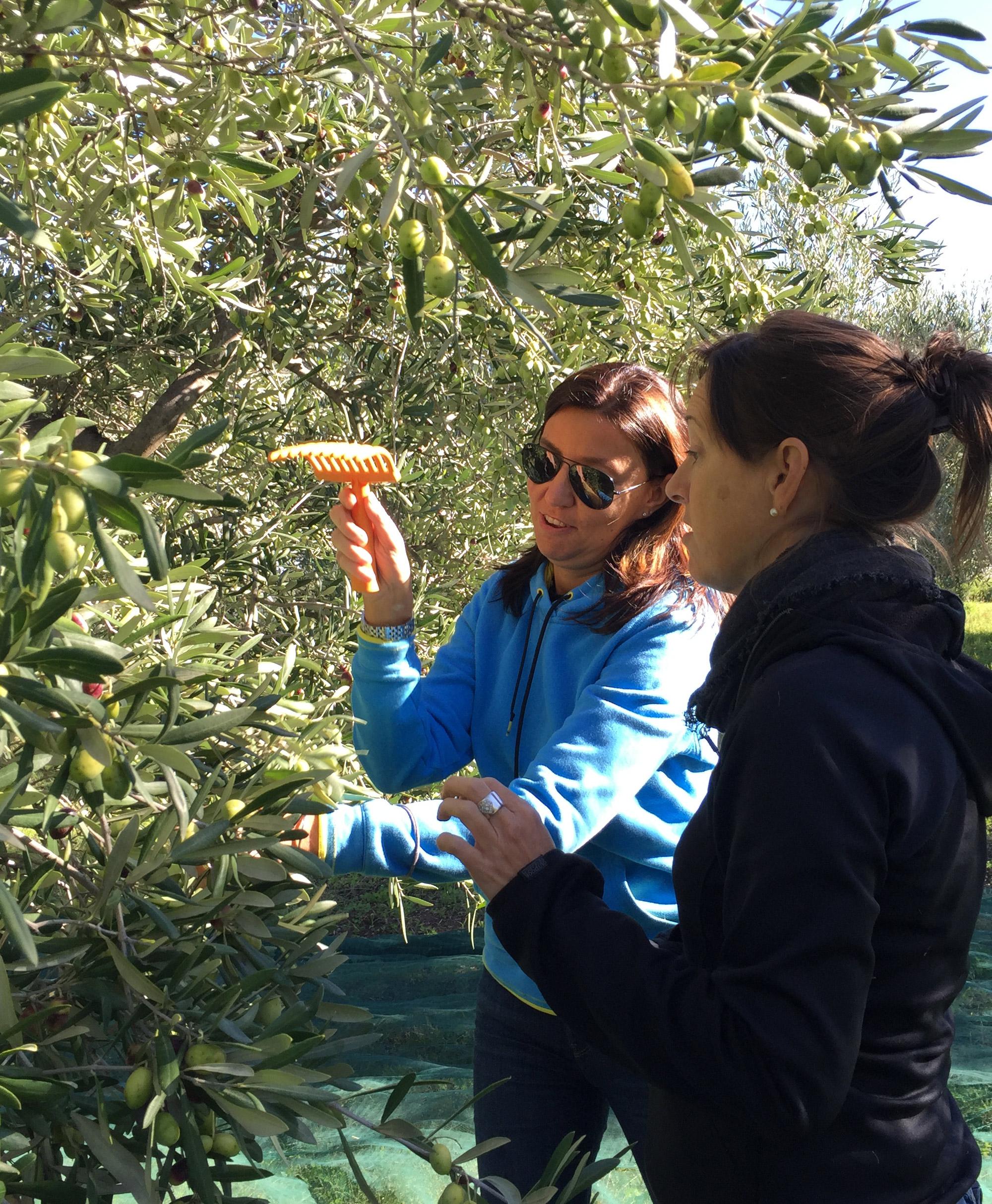 Nancy explique comment récolter les olives